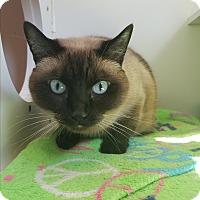 Adopt A Pet :: Sativa - Seattle, WA