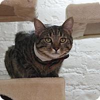 Adopt A Pet :: Jude - Brooklyn, NY