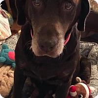 Adopt A Pet :: Ellie Mae - Cantonment, FL