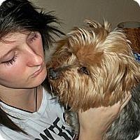 Adopt A Pet :: Rufus - Lorain, OH