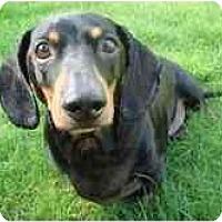 Adopt A Pet :: MYLO - Portland, OR