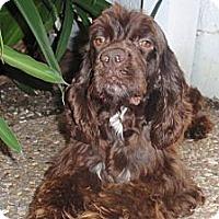Adopt A Pet :: Hershey - Sugarland, TX