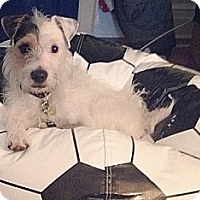 Adopt A Pet :: Jaxson - Hamilton, ON