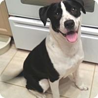 Adopt A Pet :: Lana - Orlando, FL