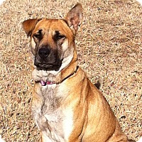 Adopt A Pet :: CANDY/Please read about me! - Leland, MS