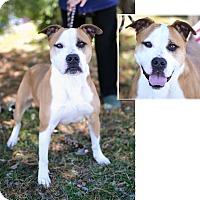 Adopt A Pet :: Ozzie - Springfield, IL