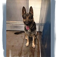 Adopt A Pet :: Kiera. COURTESY POSTING - Phoenix, AZ