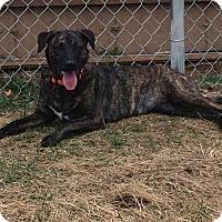 Adopt A Pet :: Izzy - La Crosse, WI