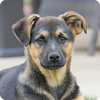 Adopt A Pet :: Ashley von Dame - Thousand Oaks, CA