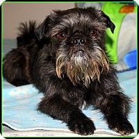 Adopt A Pet :: FINLEY in Rogers, AR. - Little Rock, AR