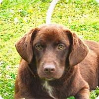 Adopt A Pet :: **PIPER** MEET JUNE 11TH! - Mukwonago, WI