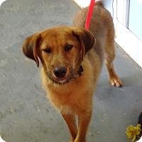 Adopt A Pet :: Butkus - Delaware, OH