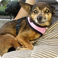 Adopt A Pet :: Ava - Oakley, CA