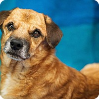 Adopt A Pet :: Charley - Millersville, MD