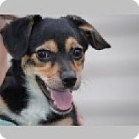 Adopt A Pet :: Emily - Pittsboro, NC