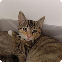 Adopt A Pet :: Zora Grace - Crown Point, IN
