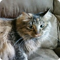Adopt A Pet :: Scarlet - Anchorage, AK