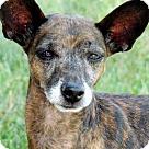 Adopt A Pet :: GIGI