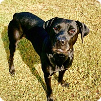 Labrador Retriever Mix Dog for adoption in Fort Valley, Georgia - Nala
