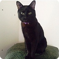 Adopt A Pet :: Radagast - Vancouver, BC