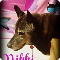 Labrador Retriever/German Shepherd Dog Mix Dog for adoption in Phoenix, Arizona - NIKKI