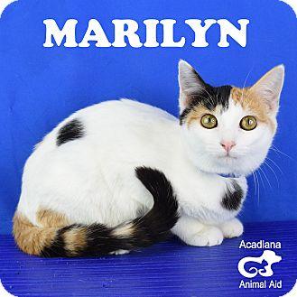 Domestic Shorthair Kitten for adoption in Carencro, Louisiana - Marilyn