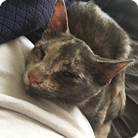 Adopt A Pet :: Janis - Hinesville, GA