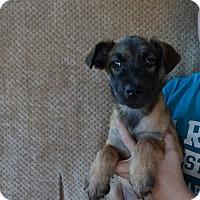 Adopt A Pet :: Kahloa - Oviedo, FL
