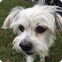 Adopt A Pet :: Holly - Rockaway, NJ