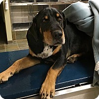 Adopt A Pet :: Frankie - Rockingham, NH