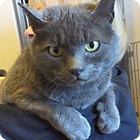Adopt A Pet :: LouAnna - Port Angeles, WA