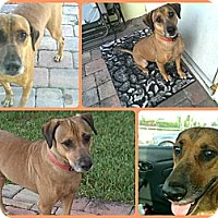 Adopt A Pet :: Alfie - Orlando, FL