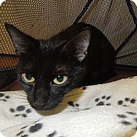 Adopt A Pet :: Little Mama - Medina, OH