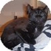 Adopt A Pet :: Miz Bean - Vancouver, BC