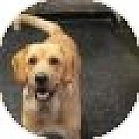 Adopt A Pet :: Leonard - Denver, CO