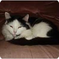 Adopt A Pet :: Baby - Delmont, PA