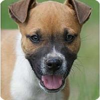 Adopt A Pet :: Gleeson - Providence, RI