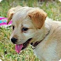 Adopt A Pet :: Palmolive - Austin, TX