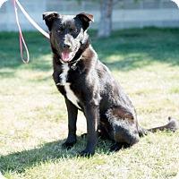 Adopt A Pet :: Grace - Saskatoon, SK