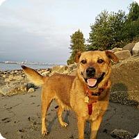 Adopt A Pet :: Martin - Pitt Meadows, BC