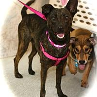 Adopt A Pet :: Sabrina - Surrey, BC
