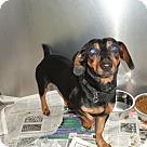 Adopt A Pet :: Owen