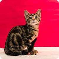 Adopt A Pet :: Fin - Houston, TX