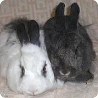 Adopt A Pet :: Jackson - Woburn, MA
