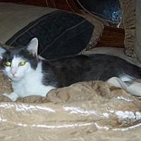 Adopt A Pet :: zz 'Chloe' courtesy listing - Cincinnati, OH