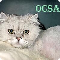 Adopt A Pet :: Ocsar - Hamilton, MT
