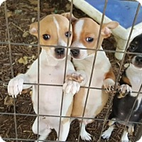 Adopt A Pet :: Bubba & Rowdy - Fair Oaks Ranch, TX