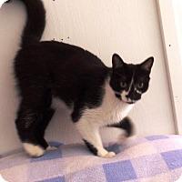 Adopt A Pet :: Theodore - Transfer, PA