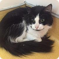 Adopt A Pet :: Carabella - Hudson, NY