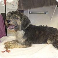 Adopt A Pet :: Zoe - Manning, SC